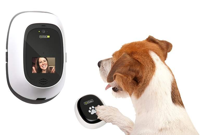 Pet camera