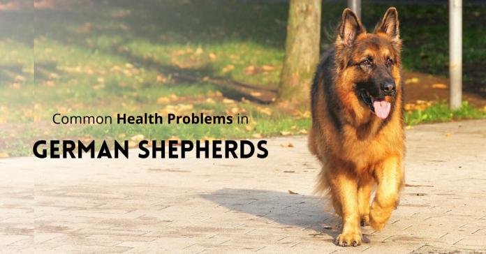 German Shepherd Health issues