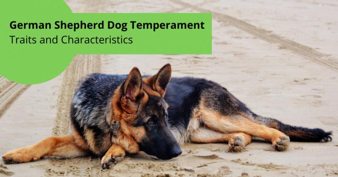 German Shepherd Dog Temperament Traits and Characteristics