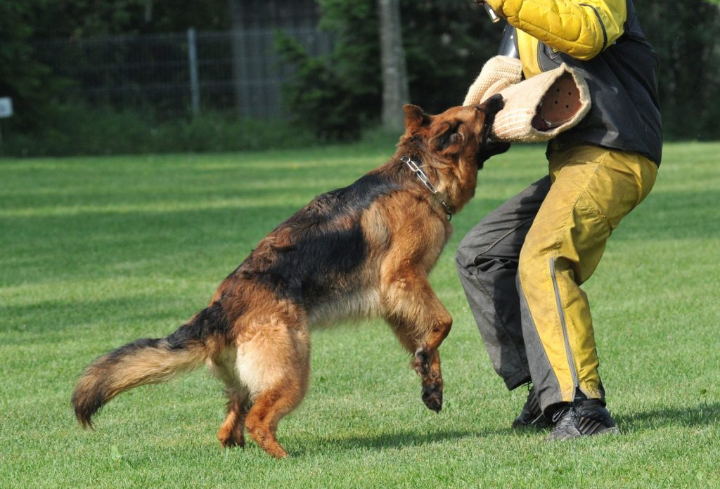 German Shepherd Bite