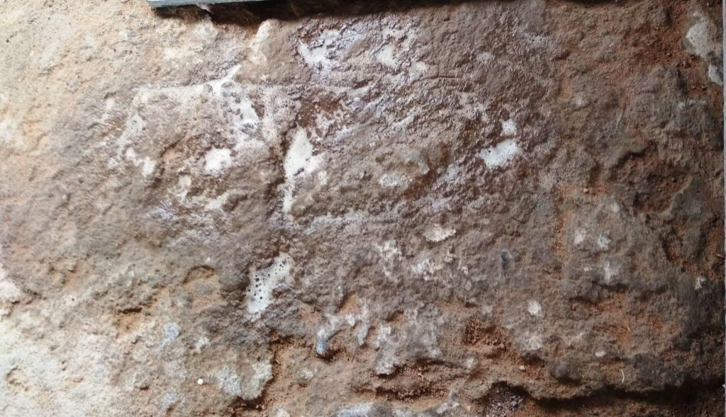 Dog urine on Concrete