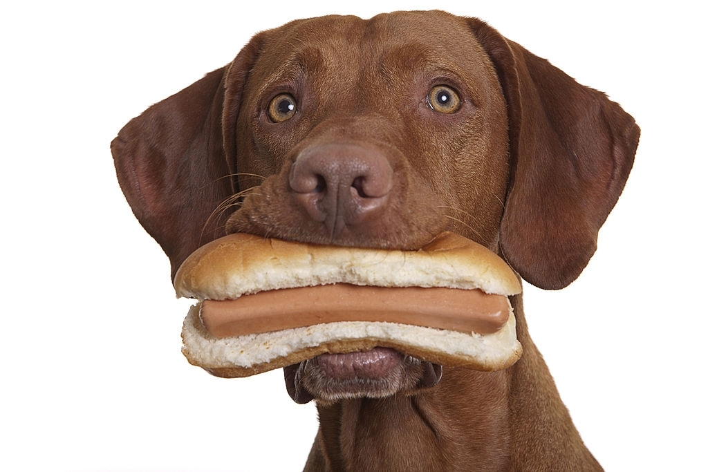dog and bread