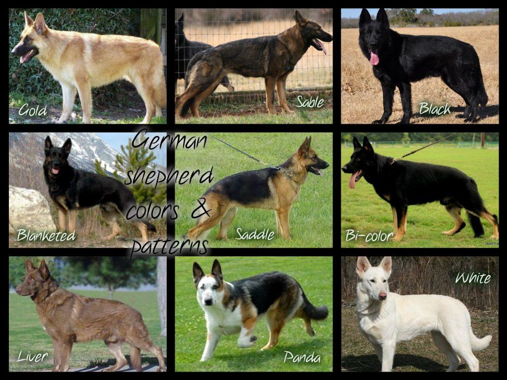 German Shepherd Colors