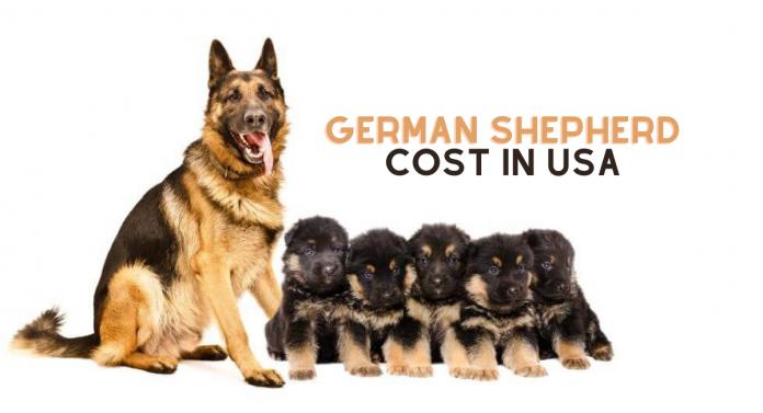 German shepherd Price