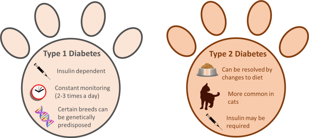 Types of Insulin Shots for Dogs
