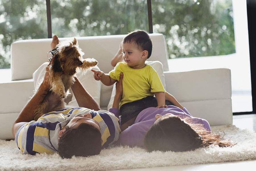 Introduce Baby to a Hyper Dog