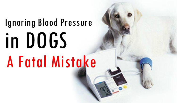Symptoms of High Blood Pressure In Dogs