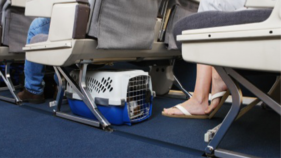 traveling with dogs inside airline cabin