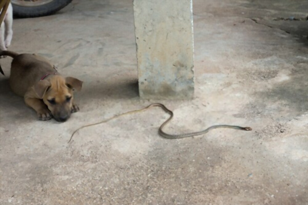 snake bite on dog